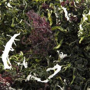 Kaiso Dried Seaweed Mix, Seetang getrocknet, 6 Algensorten für Kaiso Salat, 100 g